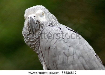 Cute gray parrot sitting on a tree