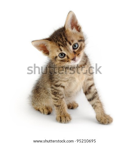 cute gray striped kitten, sitting and looking at the viewer, isolated