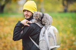Cute gray young cat dressed leash for cats outdoors in autumn park street,stands on shoulder of owner,back of man dressed transparent cat backpack,no face.Animal care, people and pets theme, close-up