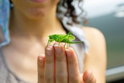 Cute green grasshopper sits on the fingers of a female hand on a summer sunny day, close up
