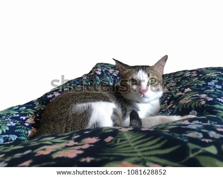 Cute grey and white cat sitting on the floral fabric blanket, looking at the camera, isolated on white background #1081628852