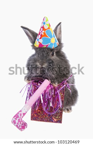 Cute grey bithday party baby bunny rabbit, wearing hat, with gift and noise maker isolated on white background