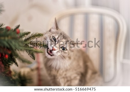 Stock Photo Cute grey cat investigating the decorations on a Christmas tree
