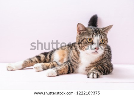 cute grey cat on pink background #1222189375