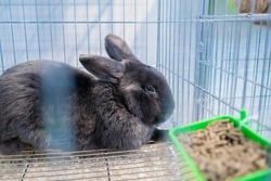 Cute grey rabbit resting in the cage at agricultural animal exhibition, pet trade show, market - close up side view. Farming, agriculture industry, livestock and animal husbandry concept
