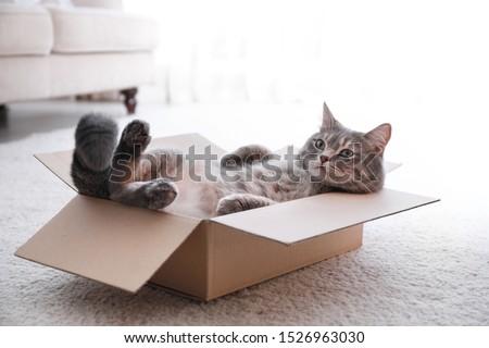 Cute grey tabby cat in cardboard box on floor at home Сток-фото ©