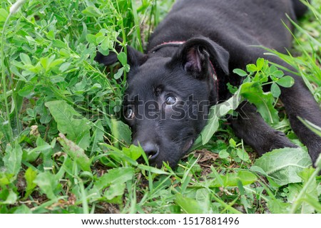 Cute homeless puppy from the dog shelter is lying in the green grass. #1517881496
