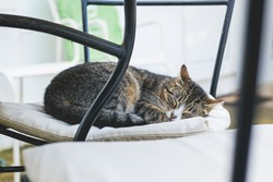 Cute house cat is sleeping on a confortable chair at home: a catnap!