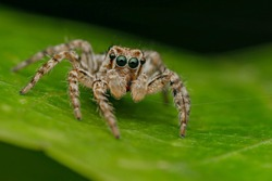 Cute jumping spider on the leaf