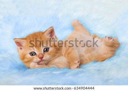 Cute kitten #634904444