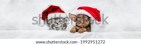 Cute kitten and Dachshund puppy wearing santa hats sleep together  under a white blanket on a bed at home. Top down view. Empty space for text