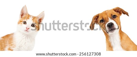 Cute kitten and puppy peeking out from the side of a white banner with room for text