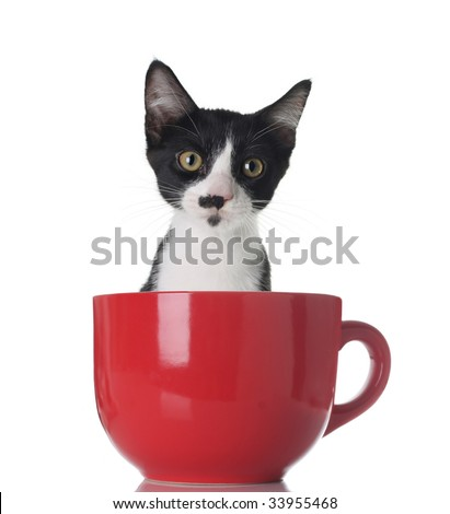 Cute kitten in a cup