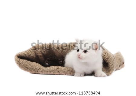 cute kitten in burlap sack on white background