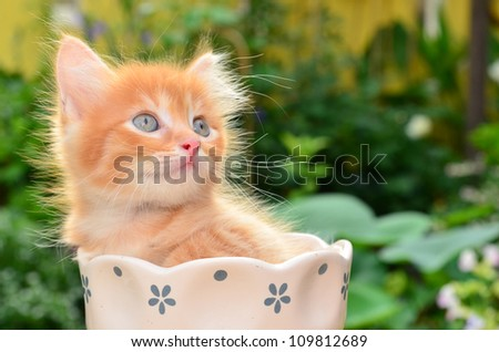 cute kitten in flower pot