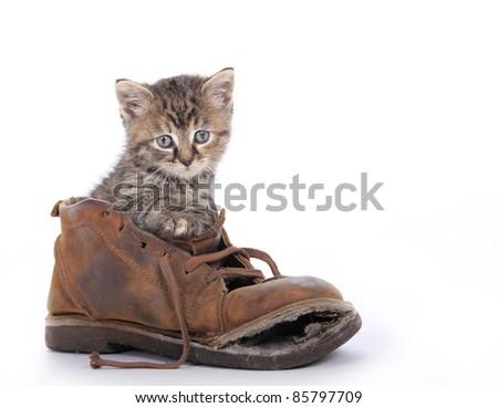 Cute kitten in old boot