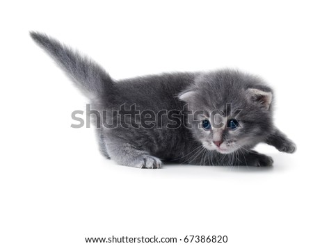 cute kitten isolated over white closeup shallow dof