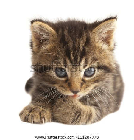 Cute kitten licking its paw on white background