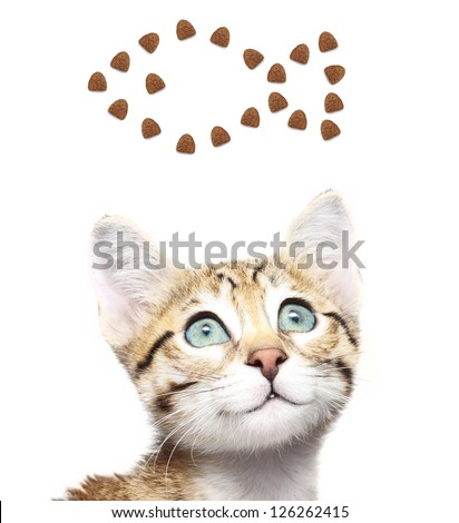 Cute kitten looking up on a fish from dry food.