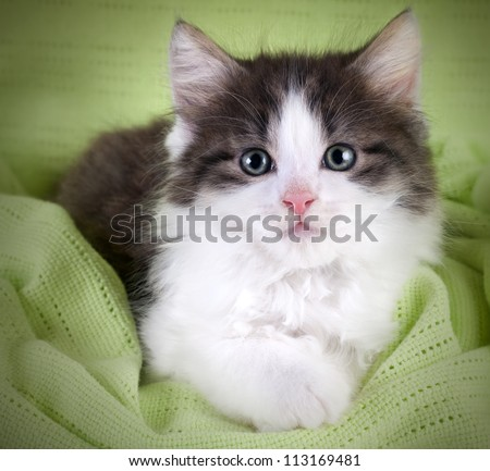 Cute kitten lying on green blanket and  looking at you
