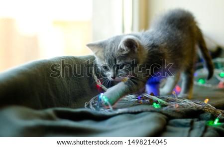 cute kitten on a windowsill with garlands