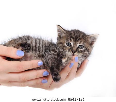 Cute kitten on white - stock photo