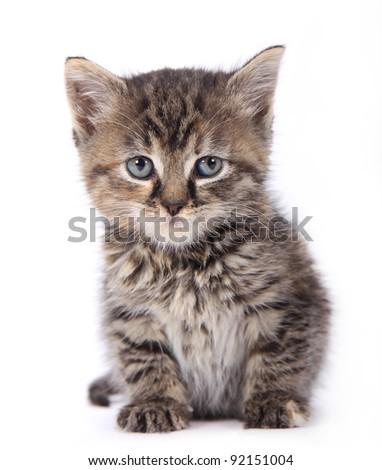 Cute kitten over white background