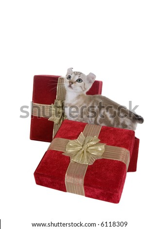 Cute kitten playing in red velvet gift boxes isolated on white background