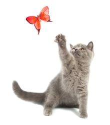 Cute kitten playing with a butterfly