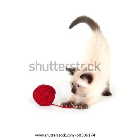 Cute kitten playing with ball of red yarn on white background
