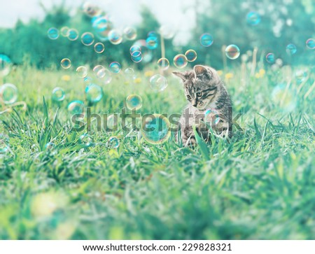Cute kitten sitting among soap bubbles on summer grass. Image with vintage instagram filter