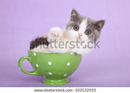 Cute kitten sitting inside green cup on lilac purple background