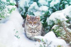 Cute kitten sitting on the snowy pine tree