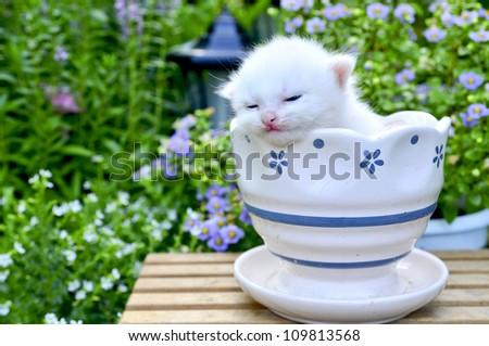 cute kitten sleep in flower pot