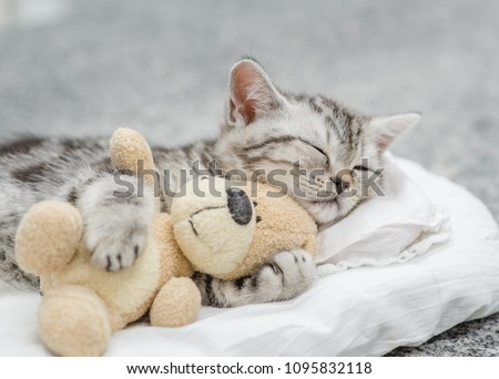 Cute kitten sleeping with toy bear #1095832118