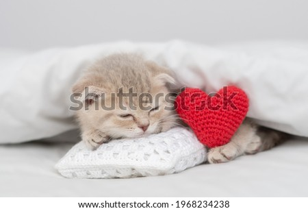 Cute kitten sleeps and hugs red heart on a bed under warm white blanket. Valentines day concept Stock fotó ©