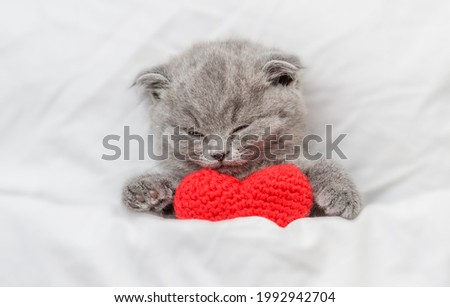 Cute kitten sleeps and hugs red heart on a bed under warm white blanket. Valentines day concept. Top down view