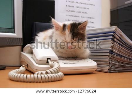 cute kitten sleeps on the desktop