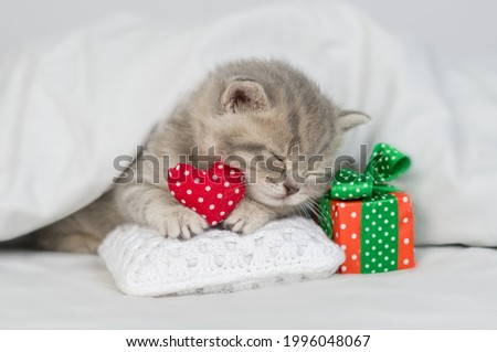 Cute kitten sleeps with gift box  and red heart on a bed under warm white blanket. Valentines day concept Stock fotó ©