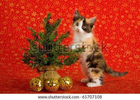 Cute kitten standing up against Christmas tree - stock photo