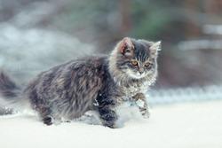 Cute kitten walking in the snow in winter