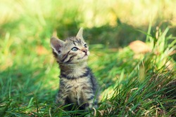 Cute kitten walking on the grass