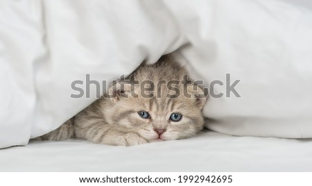 Cute kitten warms up under a blanket in cold weather