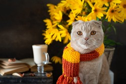 Cute kitten wearing knitted scarf sitting near open book, pumpkins, latte and flowers. Autumn mood, vibes. Fall, Thanksgiving composition, greeting card, poster. Hugge. Copy space