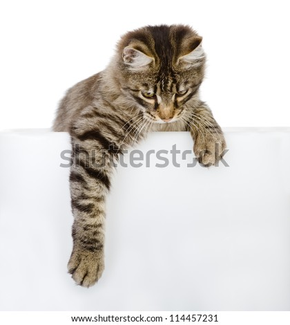 Cute kitten with empty board. isolated on white background