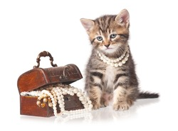 Cute kitten with jewel box with pearl necklaces isolated on white background