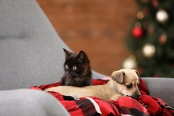 Cute kitten with puppy resting in armchair at home on Christmas eve