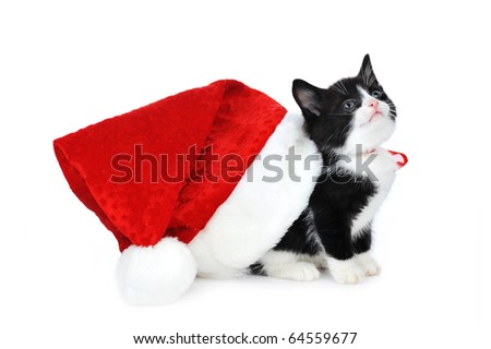 cute kitten with red Santa Claus  hat