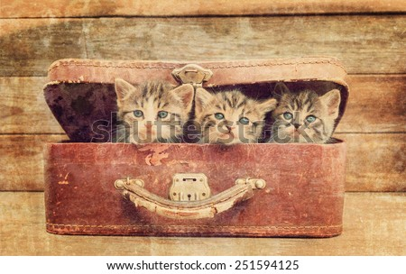 Cute kittens are sitting in vintage suitcase on a wooden background. Vintage image