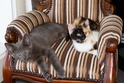 Cute kittens in a child's antique armchair